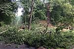 Čerstvě padlý strom - autor: Jan Drahokoupil