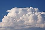 Pileus na zvdálené bouři - autor: Jan Drahokoupil