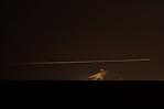 Letadlo přistávající na dráhu 06 Ruzyňského letiště - autor: Jan Drahokoupil