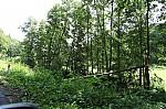 Popadané stromy - autor: Lukáš Ronge