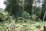 Popadané stromy na vedení el. napětí - autor: Lukáš Ronge