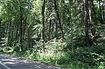 Škody na stromech - autor: Lukáš Ronge