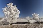 Námraza na stromech - autor: Lukáš Ronge