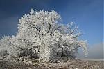 Zimní stromy II - autor: Michal Janoušek