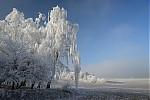Zimní stromy III - autor: Michal Janoušek
