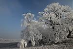 Zimní stromy - autor: Michal Janoušek
