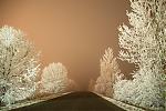 Ojíněné stromy při městském osvětlení - autor: Michal Janoušek