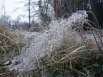 Tráva po mrznoucím dešti - autor: Michal Janoušek