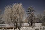 Zimní stromy urybníka - autor: Michal Janoušek