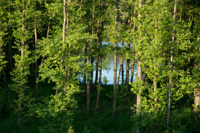 Vodní plocha mezi olšemi - autor: Michal Janoušek