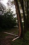 Rozštípnutý kmen stromu den po úderu blesku - autor: Tomáš Novotný
