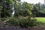 Čerstvě spadlý strom - autor: Dagmar Müllerová