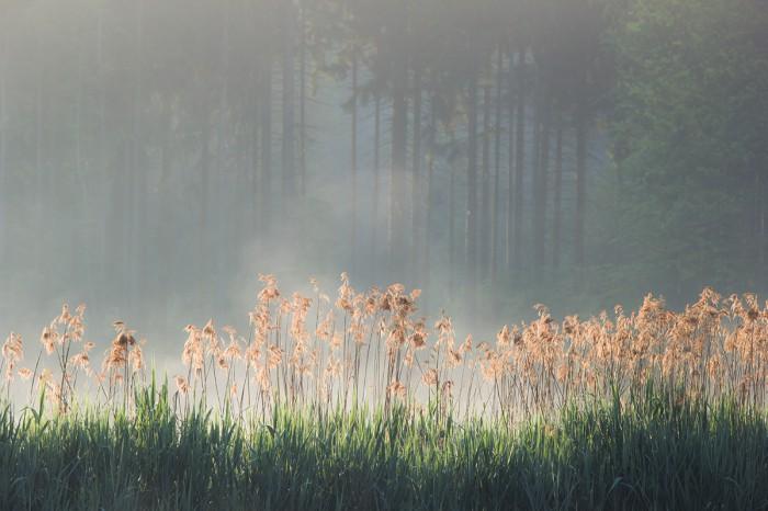 Radostovické ráno - autor: Dagmar Müllerová