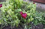 Rostlina vledu - autor: Lukáš Větříšek