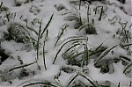 Ledovka na trávě  - autor: Lukáš Větříšek