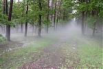 Strašidelný les :) - autor: Tomáš Chlíbec