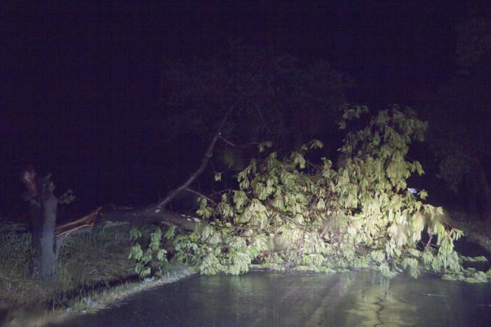 zlomený strom následkem silného větru - autor: Luboš Tuháček