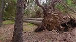 Povalené stromy - autor: Jan Džugan