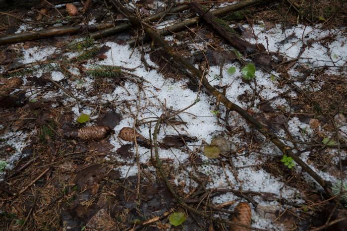 V lese po přechodu krup 01 - autor: Jan Džugan