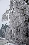 Škody páchané ledem na stromech byly značné - autor: Jan Švarc