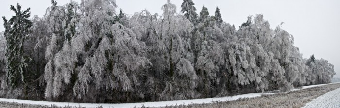 Panorama lesa uStudnic - autor: Jan Švarc