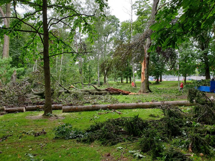Popadané a polámané stromy vparku - autor: Jan Švarc