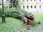 Ulomený strom - autor: Jiří Kalina