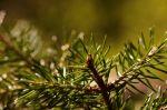 Podvečerní focení vlese - autor: Lukáš Ronge