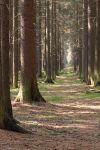 Lesní cesta - autor: Jan Drahokoupil