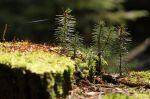 Lesní makro :-) - autor: Jan Drahokoupil