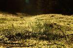 Travička zelená :-) - autor: Jan Drahokoupil