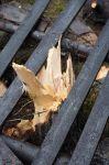 Vyvrácený strom - autor: Lukáš Ronge