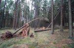 Vyvrácené stromy - autor: Lukáš Ronge