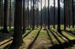 Pěkné lesy vokolí - autor: Miroslav Sedlmajer
