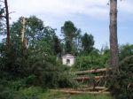 Začátek škod, les nad Podhořanami. - autor: David Rýva