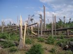 A zase zpřerážené stromy - autor: David Rýva
