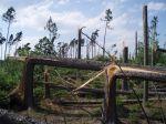 Zbytky lesa mezi Deblovem a Smrkovým Týncem - autor: David Rýva