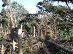 Zdevastovaný les za obcí Smrkový Týnec - autor: David Rýva