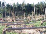 Stromy byly opět uraženy těsně uzemě - autor: David Rýva
